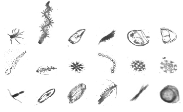 Plankton Portal Crowdsourced Classification Of Plankton